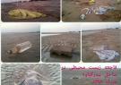 فاجعه زیست محیطی در ساحل بندرگناوه